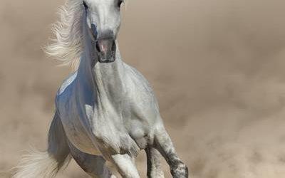 Pferdekurzgeschichte online lesen